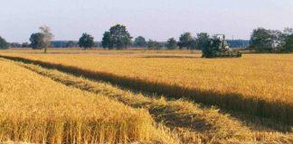 semplificazione settore agricolo